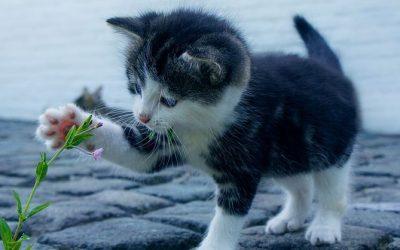 Le code de bien-être animal